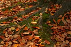 秋の終り、冬の始まり3