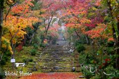 秋雨の参道
