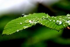 雨の日に、
