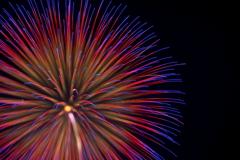 Fireworks (2019高瀬川納涼大花火大会①)