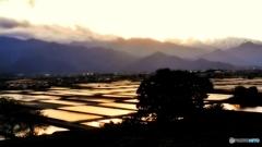 安曇野夕景(金色の田んぼ)