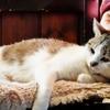 猫のいる日常 (goma)
