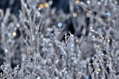 霧氷の輝き*