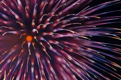 Fireworks (2019高瀬川納涼大花火大会④)