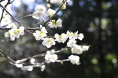 咲き始め。