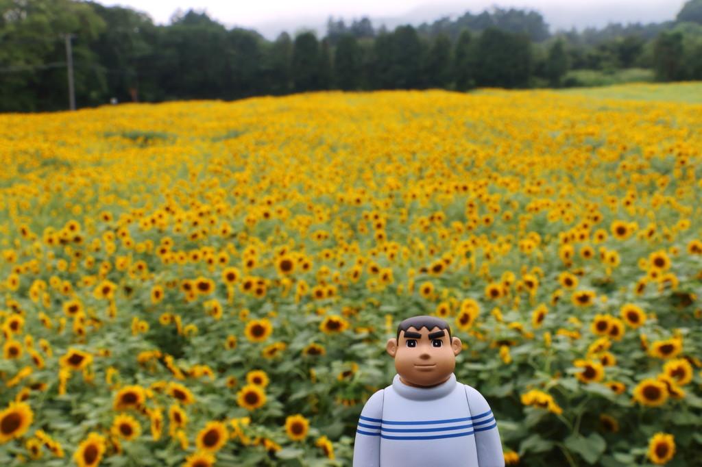 きれいなジャイアンひまわり畑に現るw