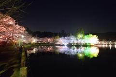 春の湖畔【八鶴湖】