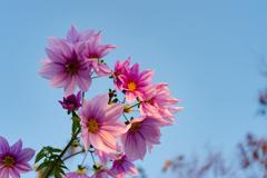 庭に咲く-Ⅱ