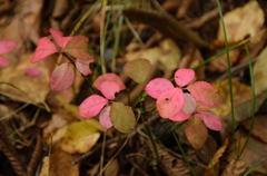 日光 河原の小さな紅葉
