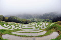 雨天の棚田