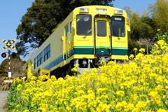 春の海へ走る列車