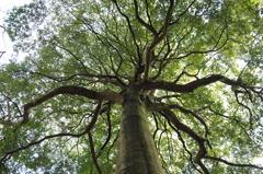 目覚める大樹