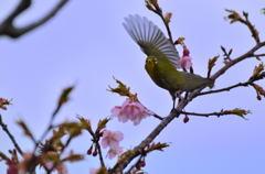 あらよっ! 桜の舞