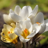 小さな春の息吹