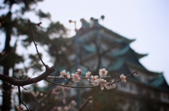 名古屋城.