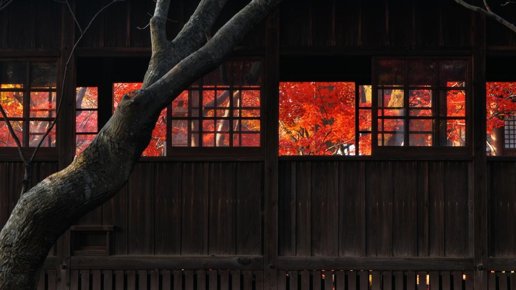 回廊の秋3