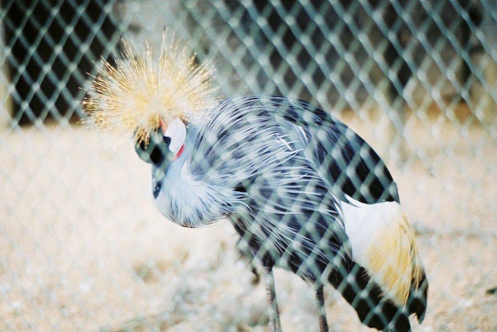 頭スゴイ鳥