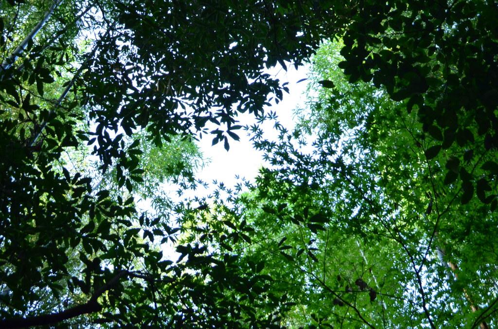 竹林の道、突入!