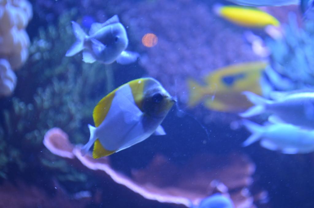 海水魚はカラフル
