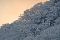 冬、久住の夜明け