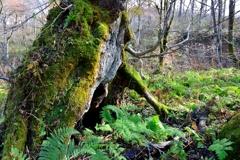 森の長老2