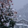 雪中忘れ柿