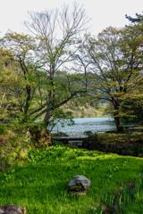 緑の芽吹き
