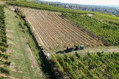 葡萄畑農作業
