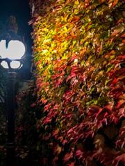 宵闇の秋模様@ボン