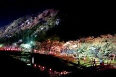 夜桜爛漫♪