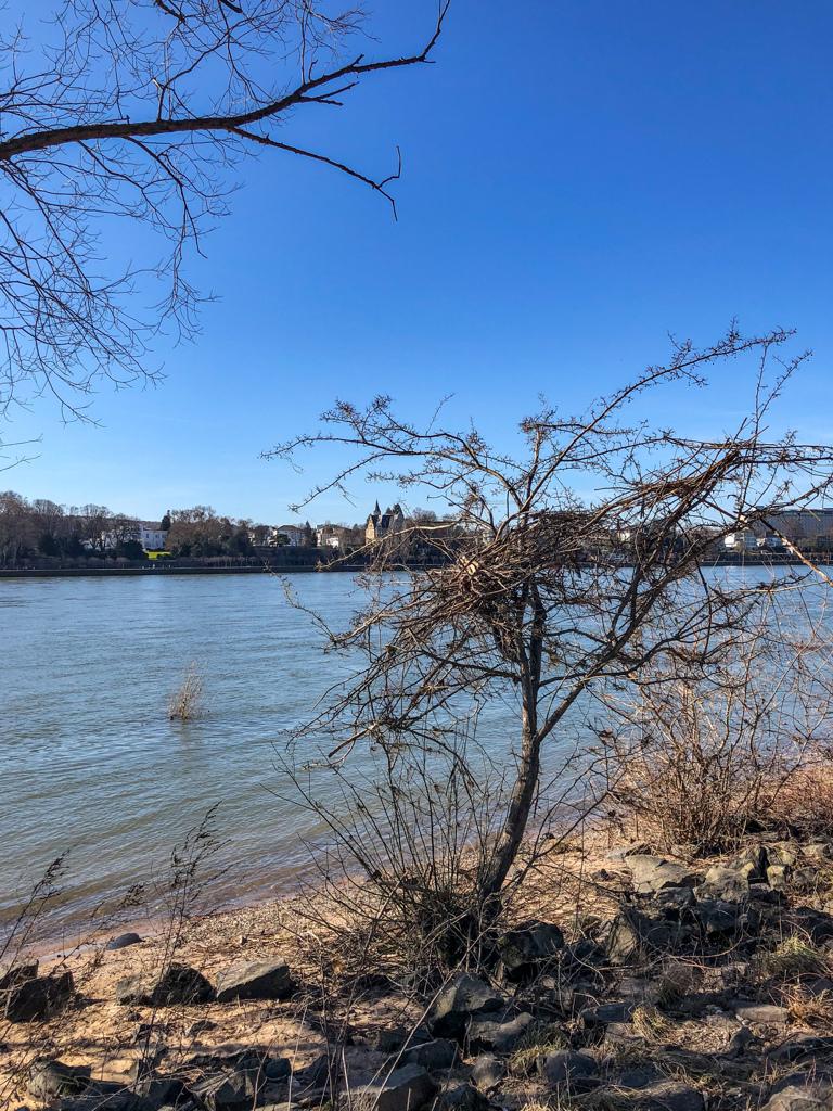 ライン川対岸散歩 増水の痕跡?@ボン・リンペリッヒ