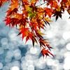 深まる里の秋Ⅱ
