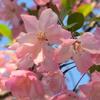 桜といっしょに開く