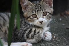 「猫の日」記念