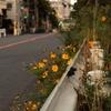 日暮れの散歩道 -3