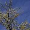 のびのびと春を告げる