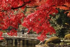 上の池の紅葉