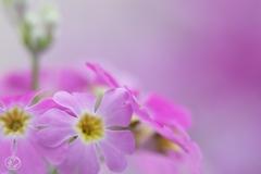 ただよう春の色