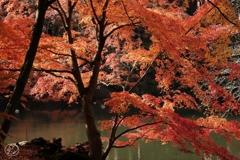 御苑の紅葉 -7