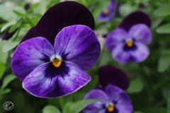 笑顔のように咲く花