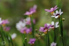 小さな群花