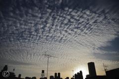 いわし雲の朝