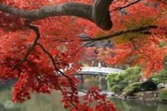 深秋の色どり