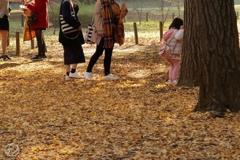 落ち葉を歩く