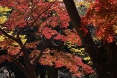 深まる紅葉