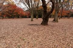 枯葉敷き詰め冬が来る