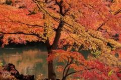 御苑の紅葉 -9