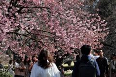 にぎわいの春