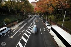 西新宿の秋