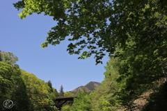 日原川の緑